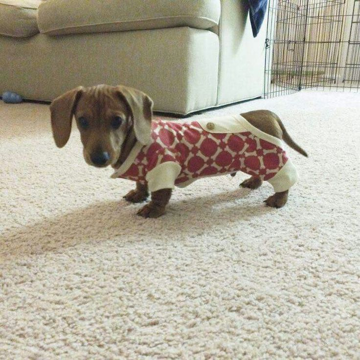 Pet S In Pajamas Baby Animals Weenie Dogs Cute Dogs