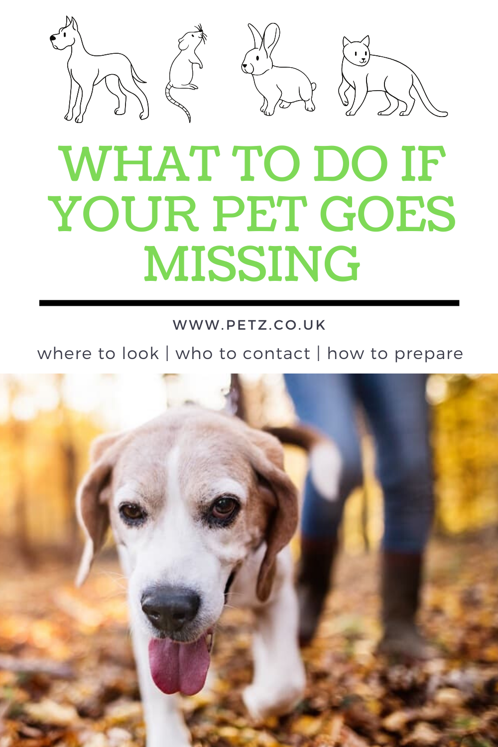 Finding Lost Pets In 2020 Losing A Pet Your Pet Pets