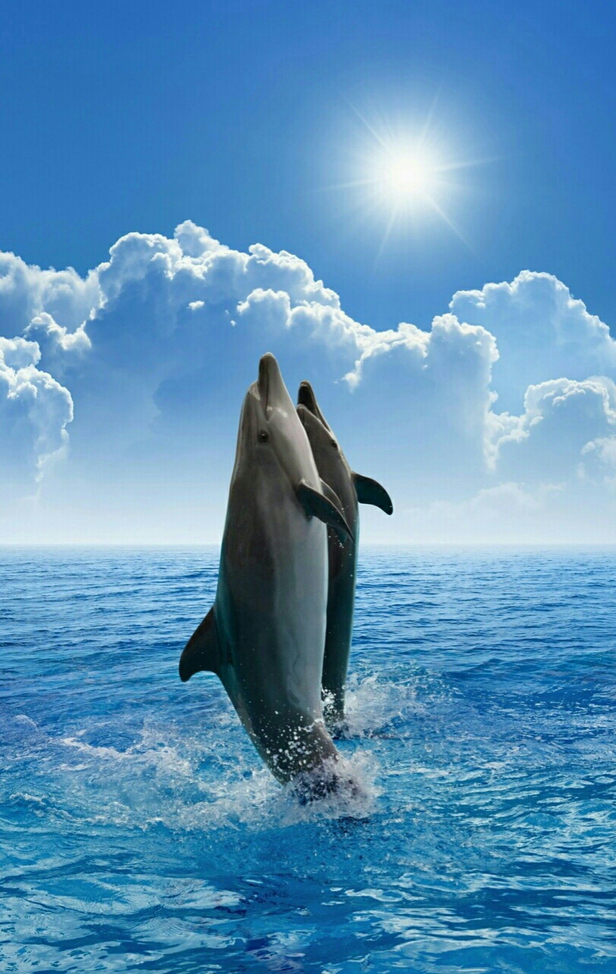Lovely Dolphin ,,,,,,,,, Halimah Nur Google+