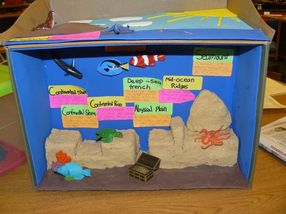 Lindseys project classroom ideas pinterest dioramas ocean lindseys project sciox Image collections