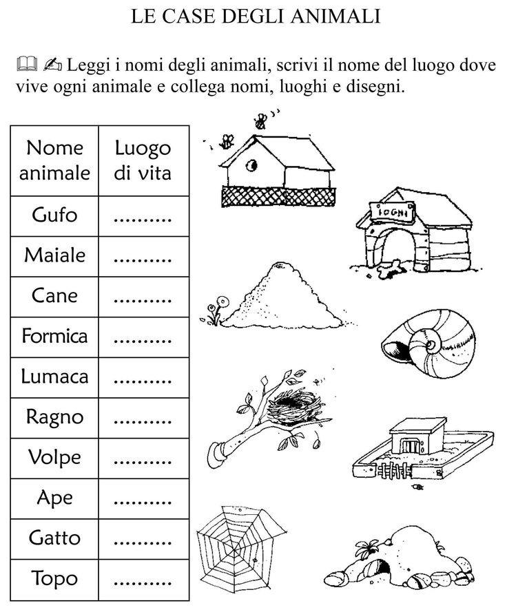 Schede didattiche scienze prima elementare cerca con google geografia pinterest schede - Da dove vengono gli scarafaggi in casa ...