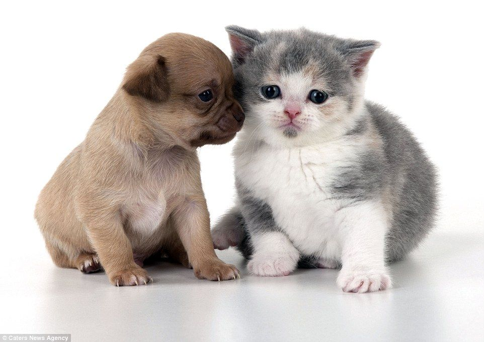 Tiny Puppies Captured With Comedy Props In Heart Warming Photo