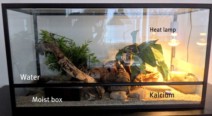Snow Leos Leopard Gecko Terrarium Under Tank Heat Pad They Do Not Need A Heat Lamp