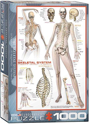 Human Anatomy Puzzles | Educational Jigsaw Puzzles | Pinterest