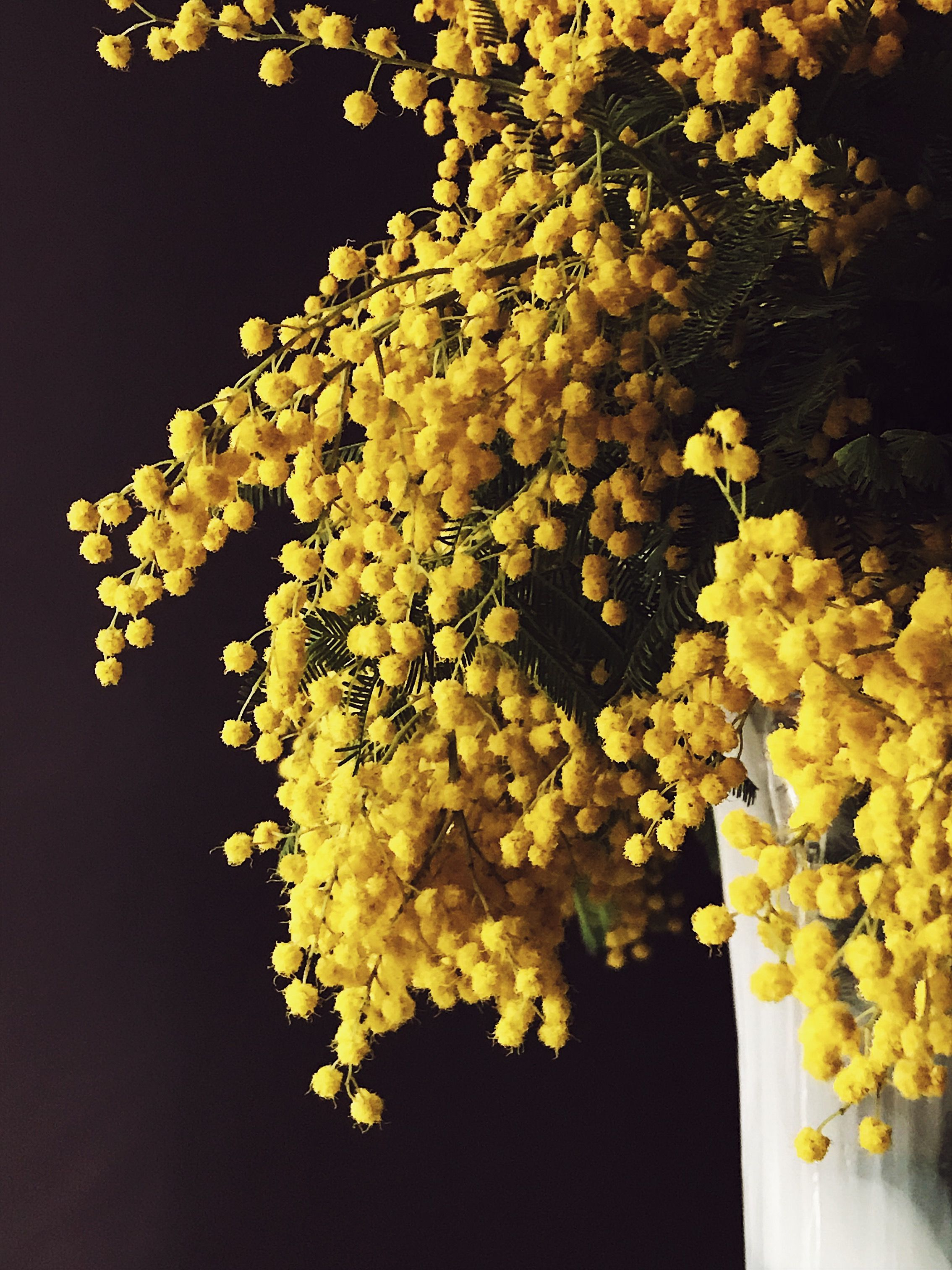 Mimosa Flowers Oh That Smell Mimosa Flower Yellow Flowers All Flowers