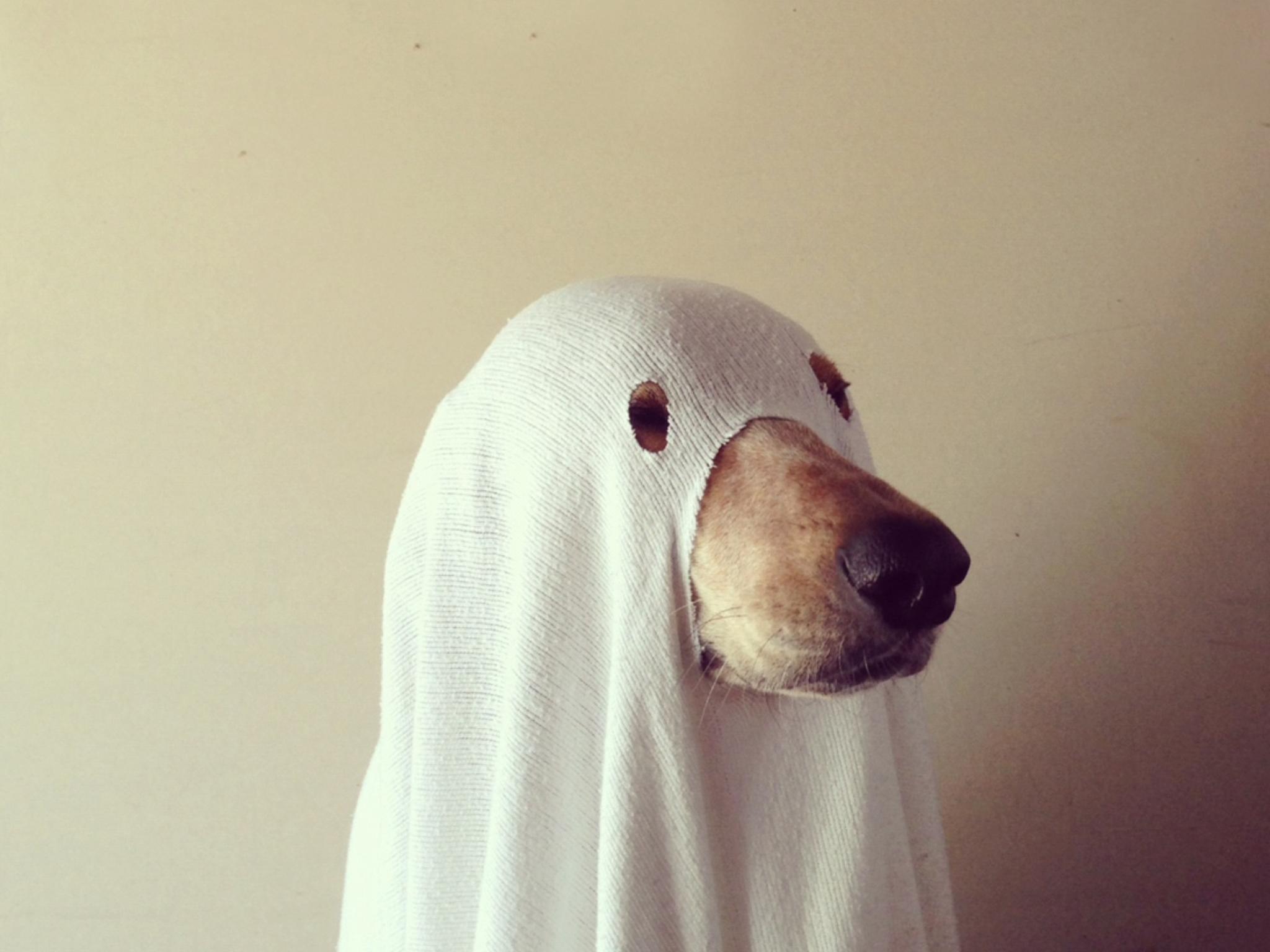 используют смешные фото призраков внешнее