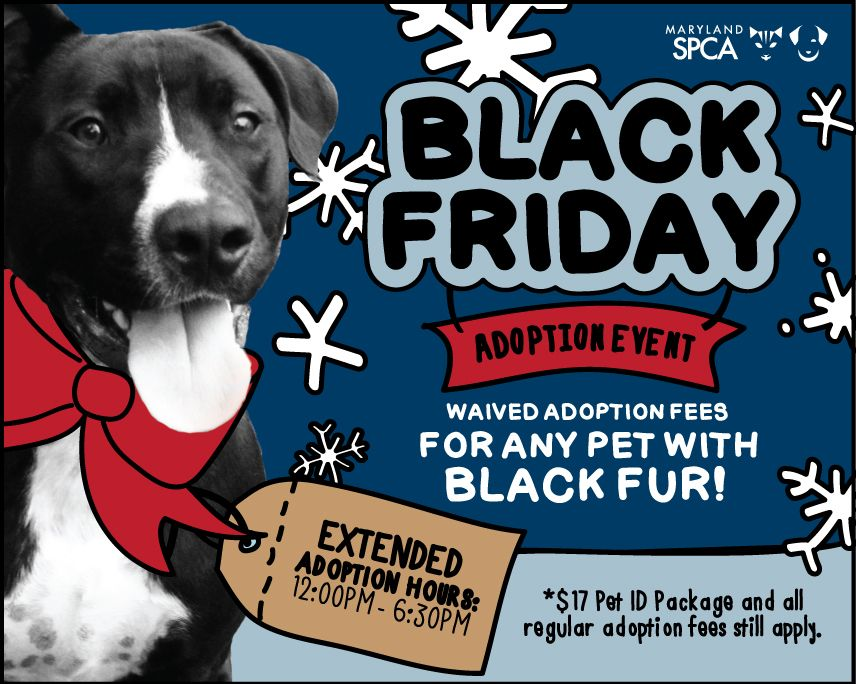Adopt A Pet During Our Annual Black Friday Adoption Event Pets Adoption Lucky Dog