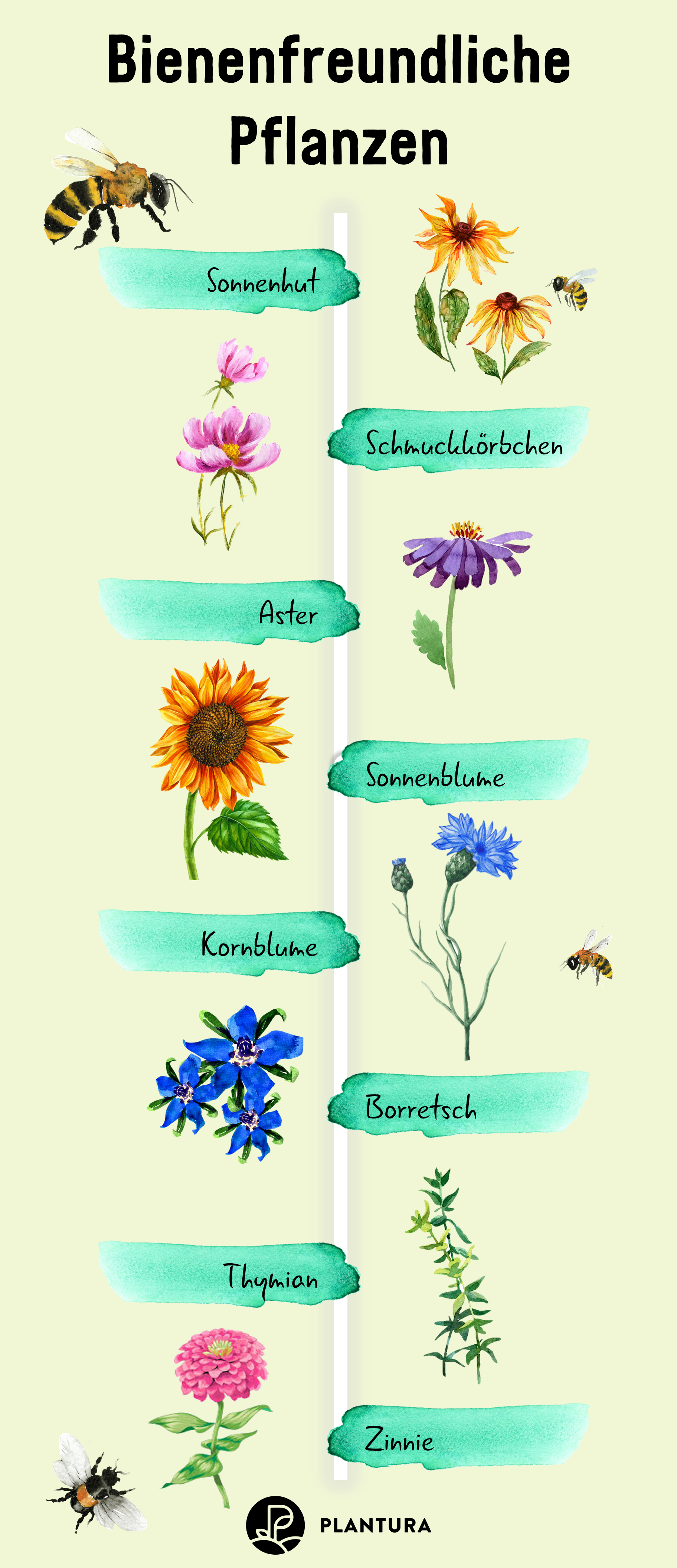 Bienenfreundliche Pflanzen für Euren Garten