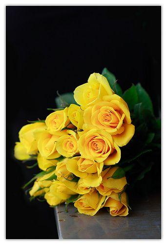 yellow roses. black background. | Visual Pleasures ...