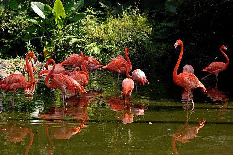 Flamingo Gardens 🦃🐔🐓 Flamingo Gardens is a 60 acre