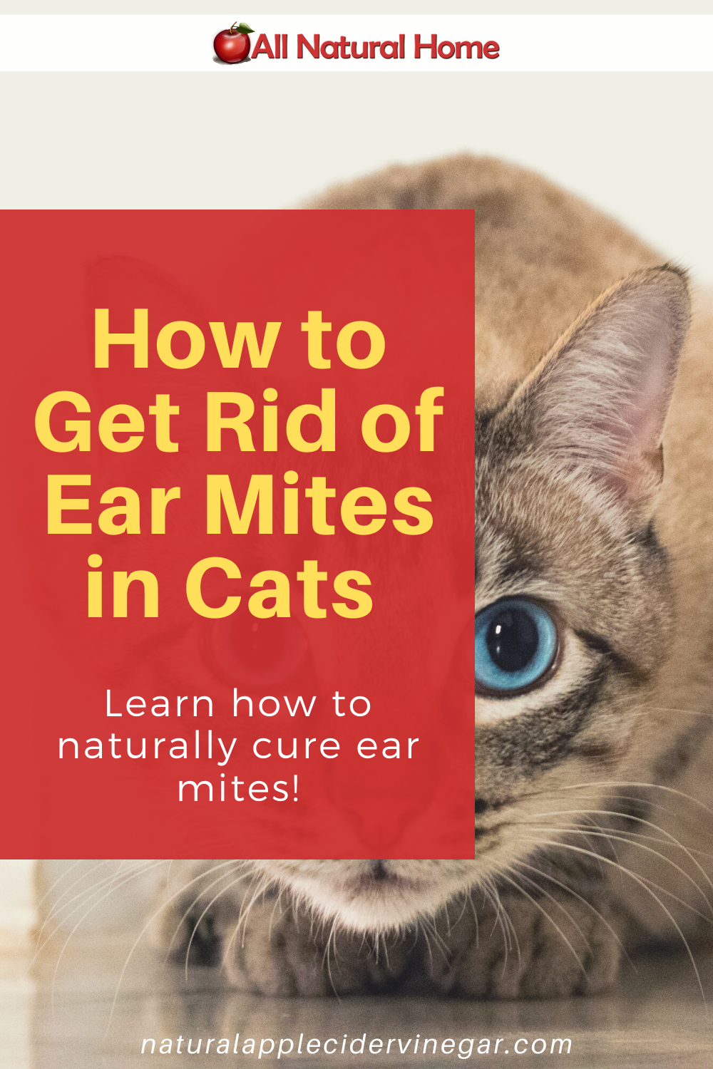 How to Get Rid of Ear Mites in Cats Natural Home Remedy
