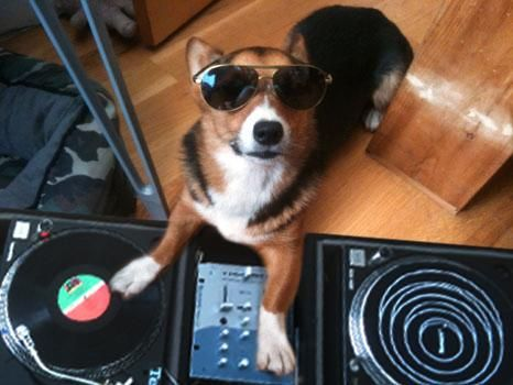 Corgi DJ - I said a hip, a hop, the hippie, the hippie - To the hip hip hop, a you don't stop - The rock it to the bang bang boogie say up jumped the boogie - To the rhythm of the boogie, the beat.