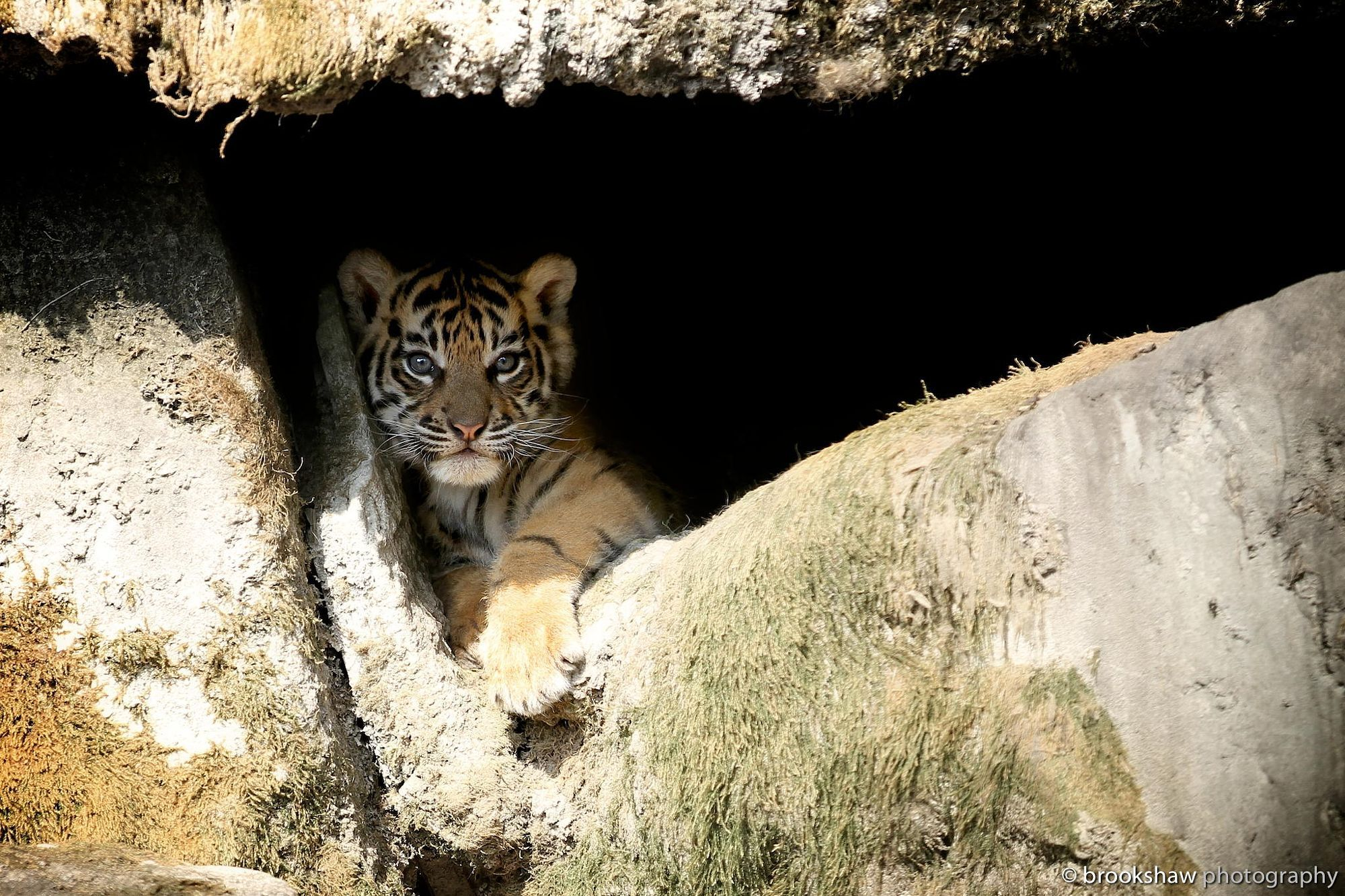 Cub In A Cave! by Gary Brookshaw on 500px