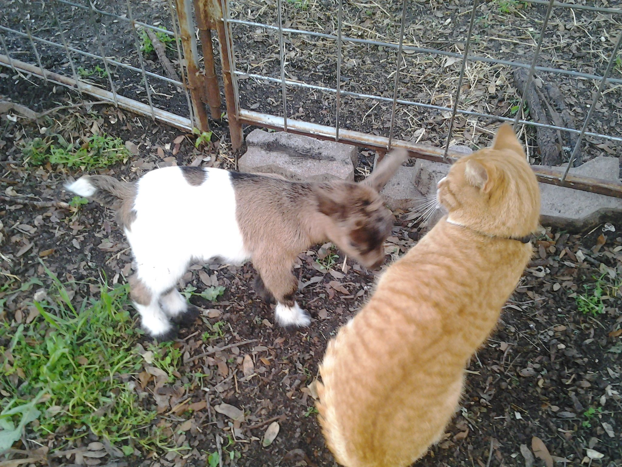 Thelma is pretty curious about Baa's friend Pumba.  :)