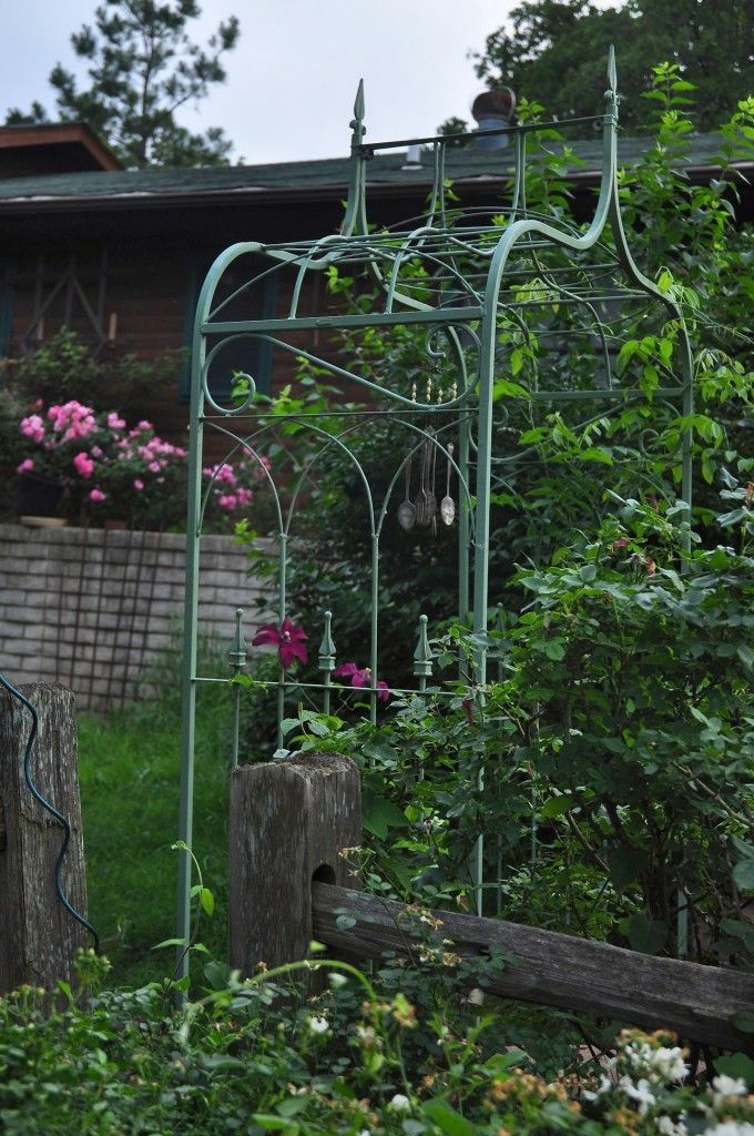 My green arbor inspired by Allen's arbor's at Moss Mountain Farm. Clematis Huvi is climbing it on one side, and Wisteria frutescens is on the other side where I lost Rosa 'Cecile Bruner.'