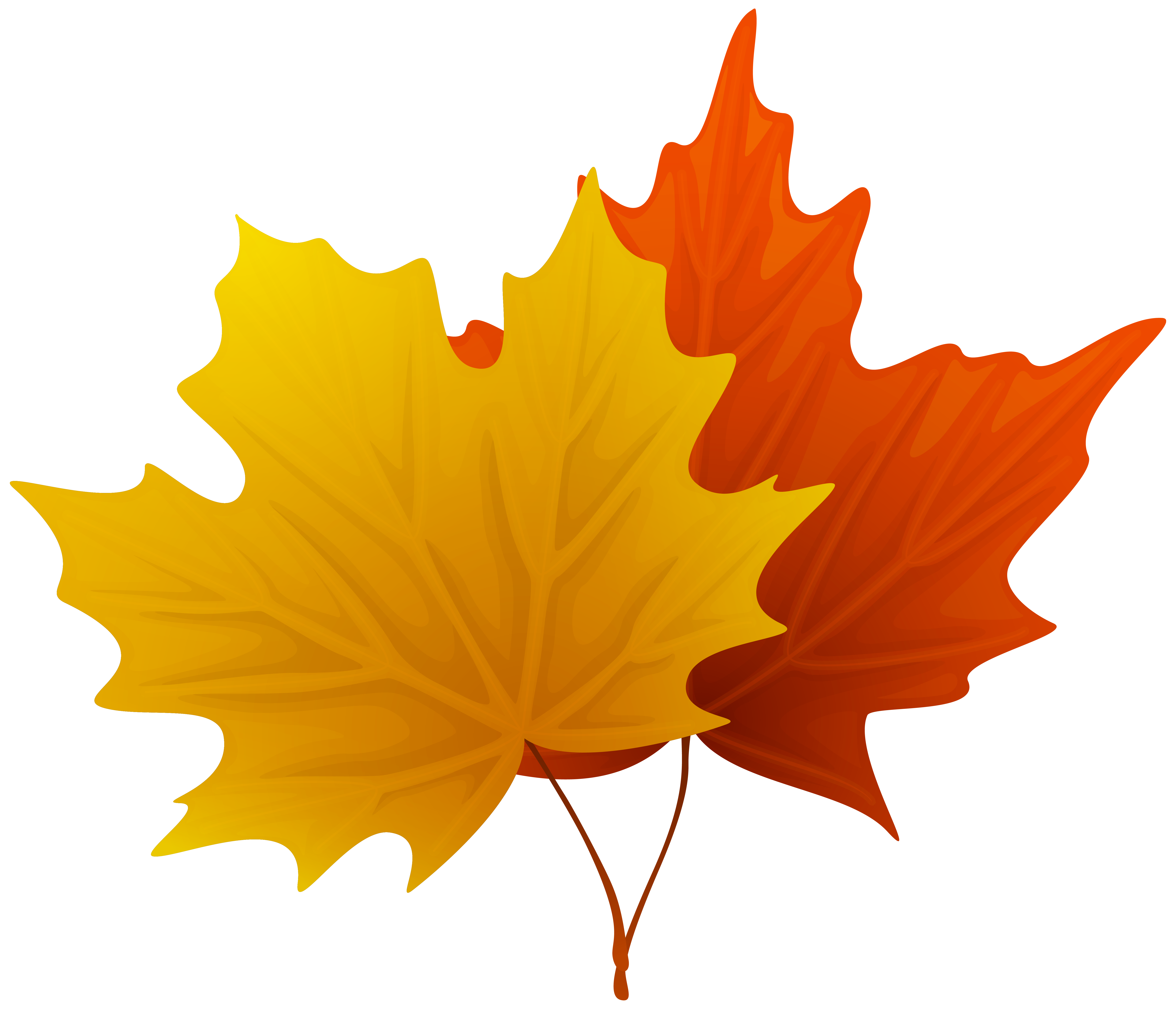 39+ Fall leaf clipart no background ideas