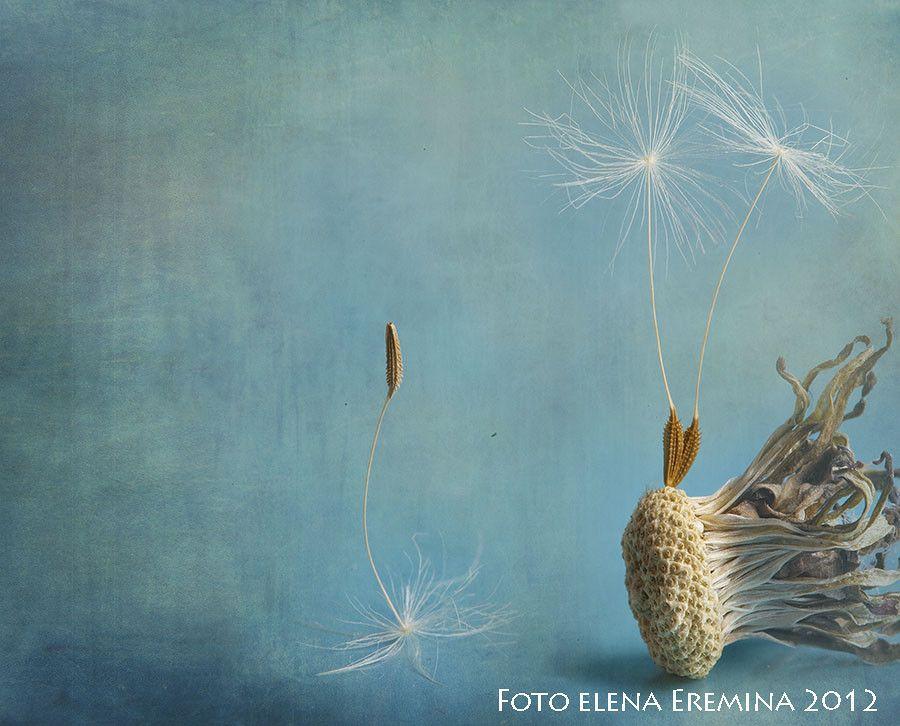 Fotografía wordless por Elena Eremina en 500px