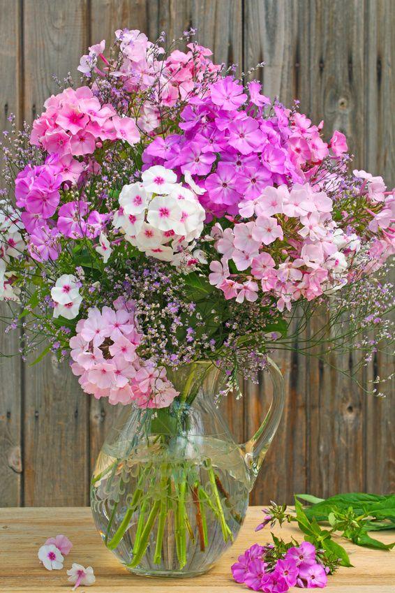 Wo Kann Ich Blumen Kaufen sommerstrauß gartenbeet neue ideen und ferienwohnung