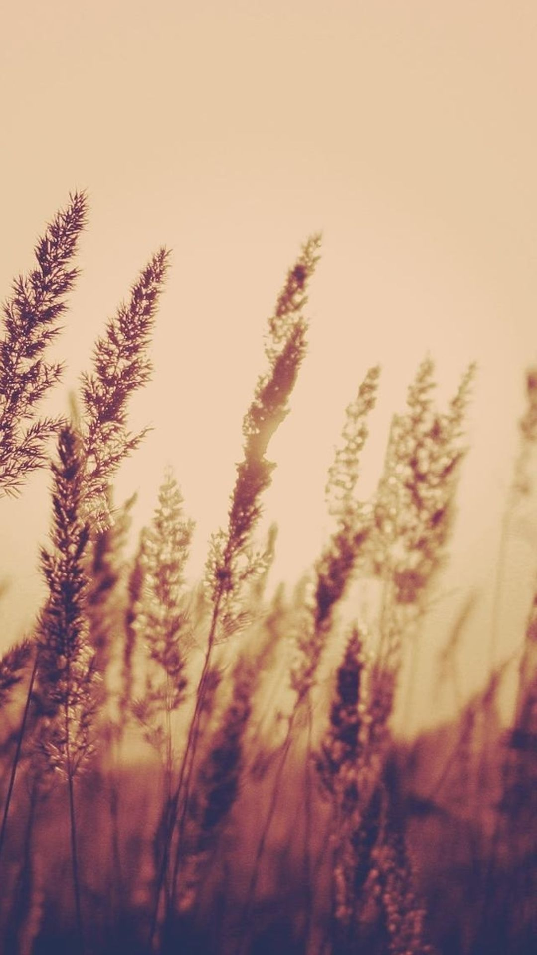 Nature Aesthetic Reed Plant Field Blur iPhone 6 wallpaper