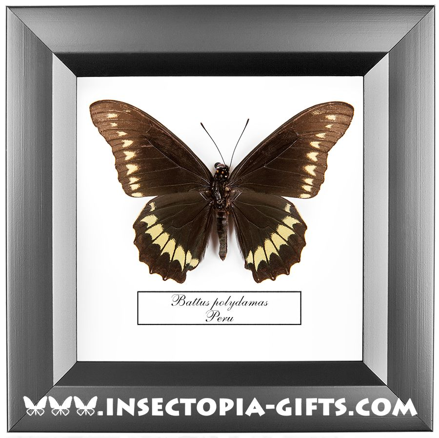 Framed butterflies, beetles and other insects.Decor, , design ...
