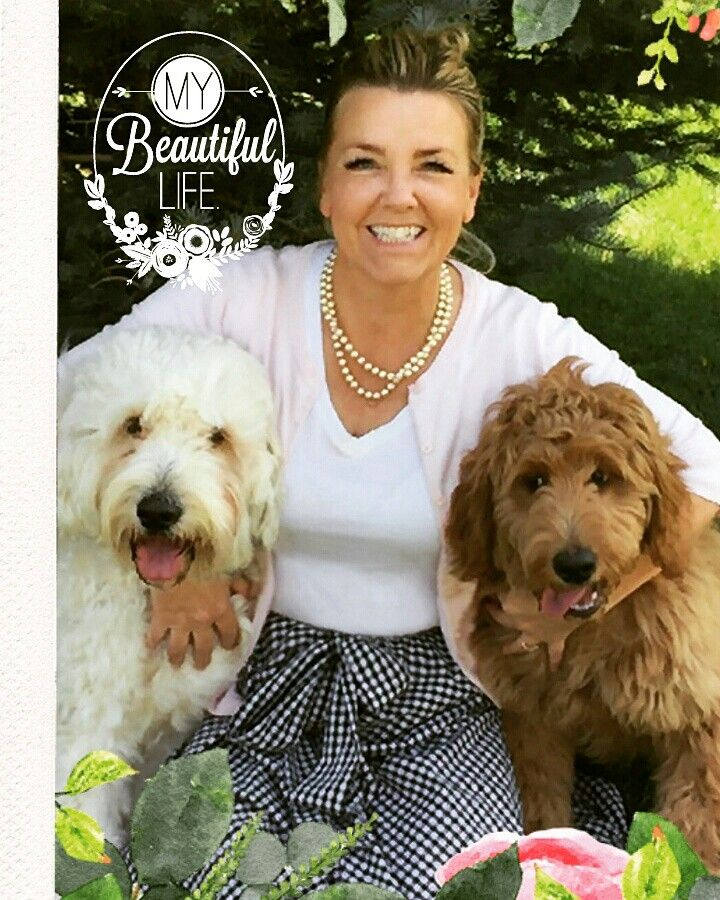 Highland Goldendoodles from Highland, Utah loves visits from our puppies! Visit us on facebook to find out when a litter is due.