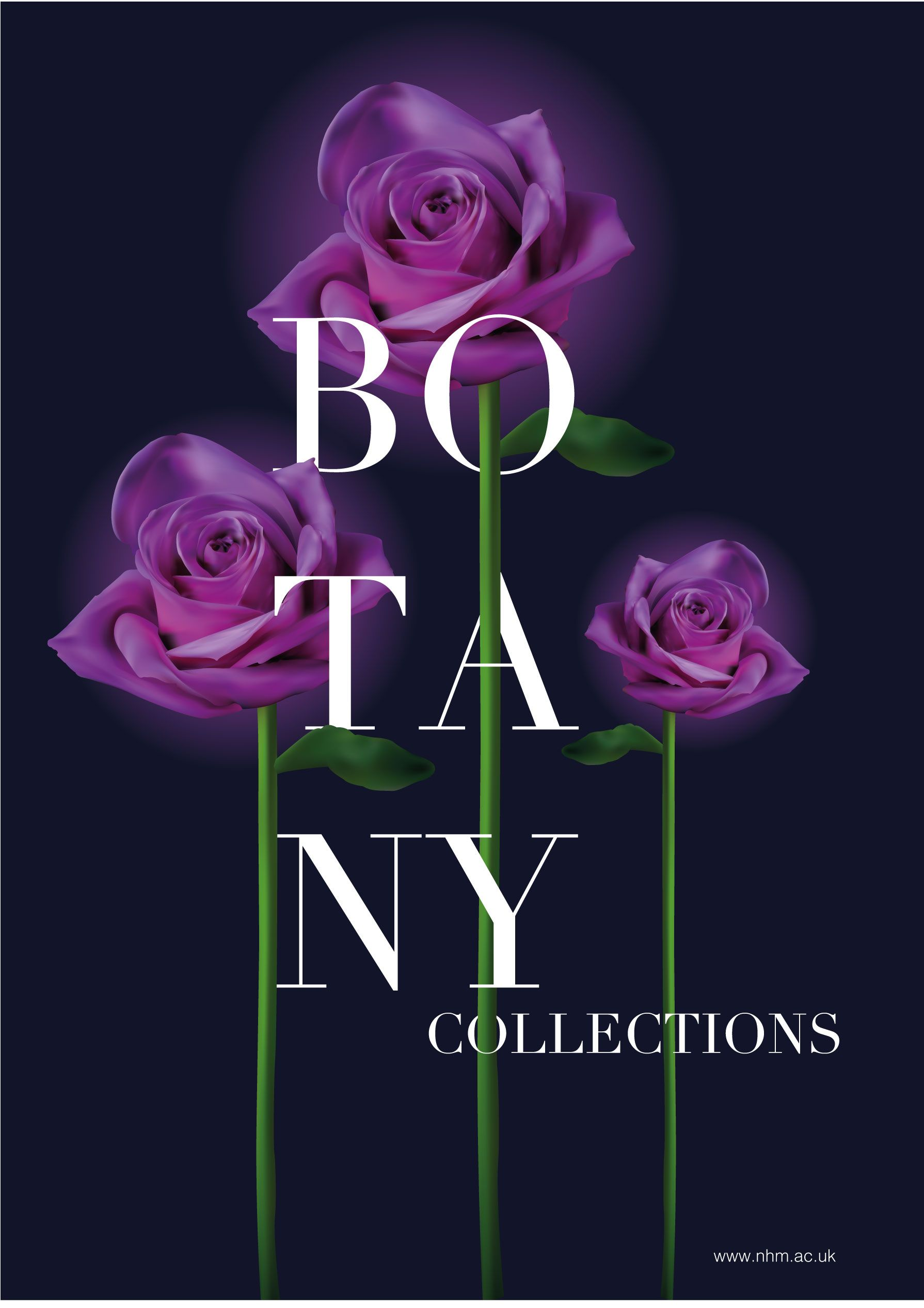 Purple rose 'Botany Collections' poster design. Created using Adobe Illustrator.