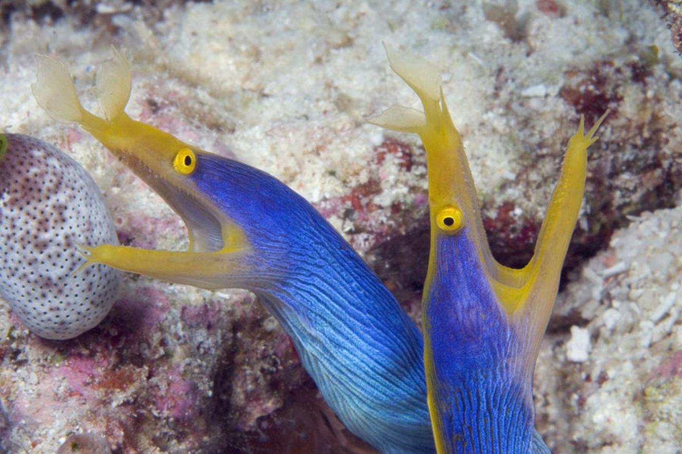 15+ Ribbon eel animal crossing images