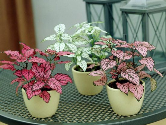 These 10 Small Indoor Plants Are Easy To Grow Take A Little E And Add More Eal The Interior