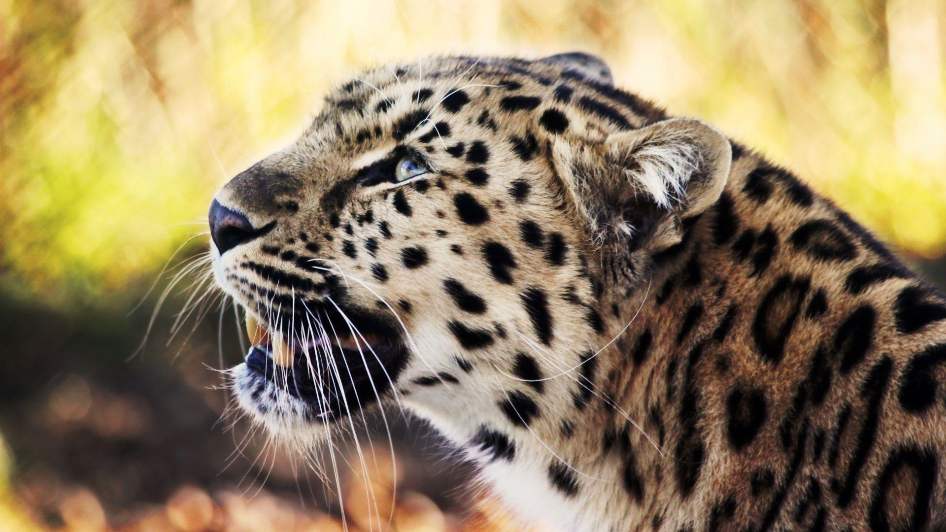 Tiger 12801024 Animais Silvestres Animais Selvagens