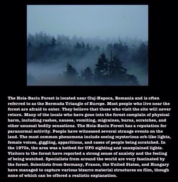 The Hoia Baciu Forest In Romania Beware The Dark Creepy