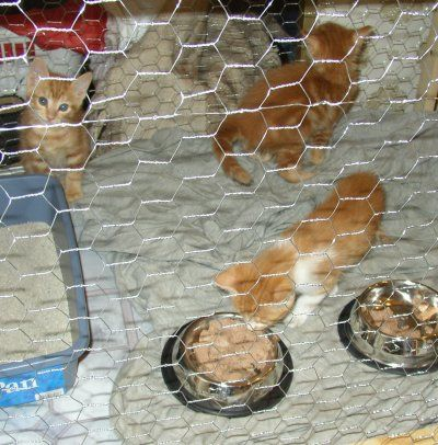 How To Build A Cat Cage Optional Materials Some Wood Trim