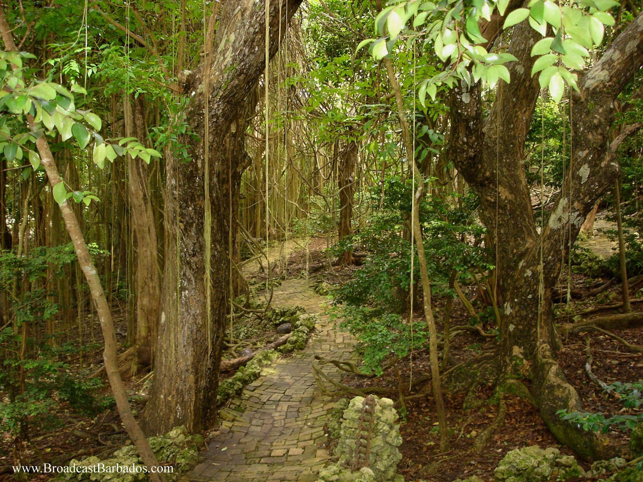 Foot path at The Barbados Wildlife Reserve