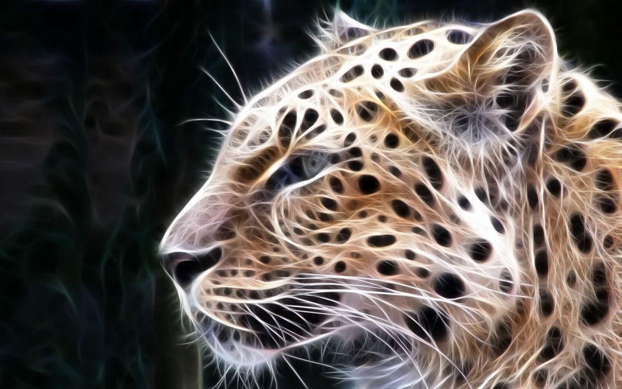 Big Cats Pictures Free Download Digital Big Cats 2desktop