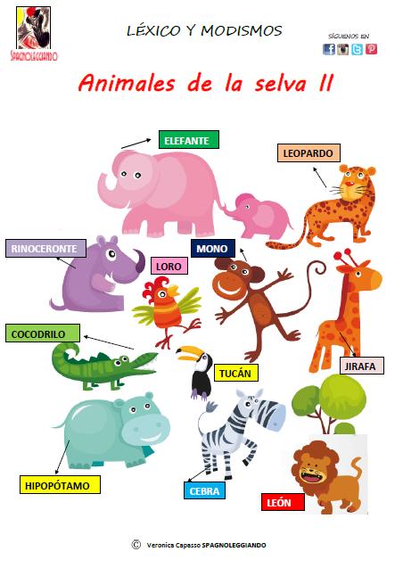 Animales De La Selva Spagnoleggiando Animales De La Selva