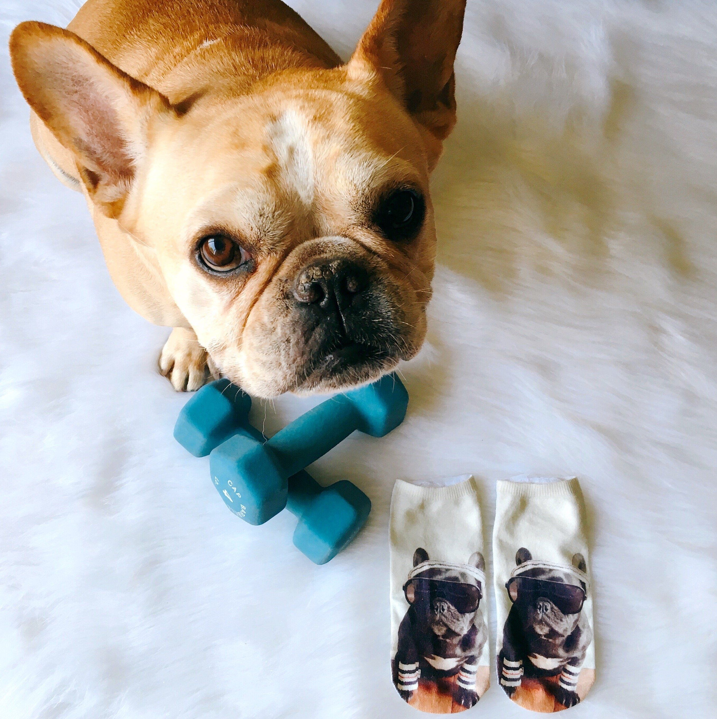 Don T Sweat It Socks Products Socks French Bulldog Dogs