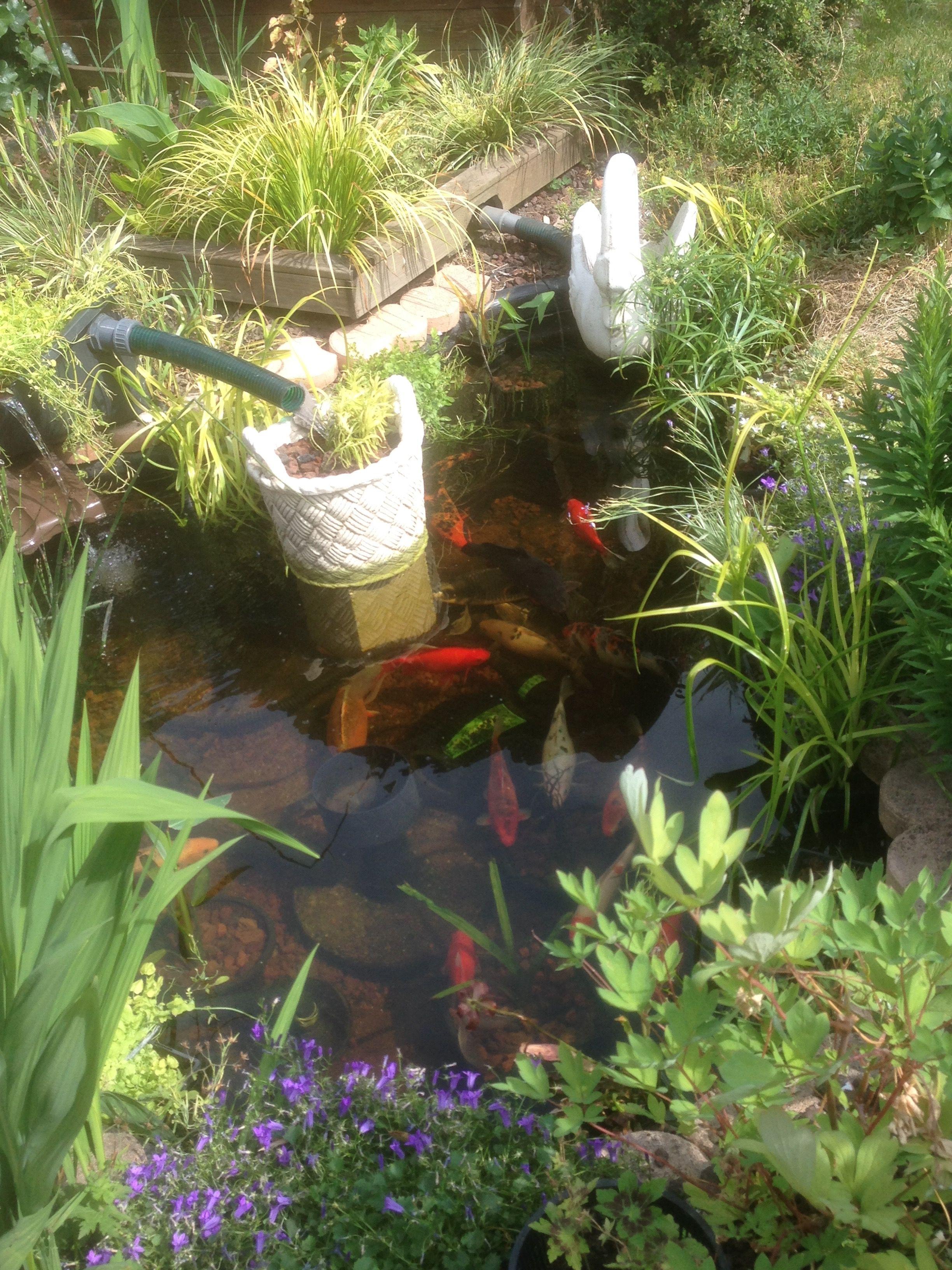 gestion de l eau au jardin un bassin sans pompe ni