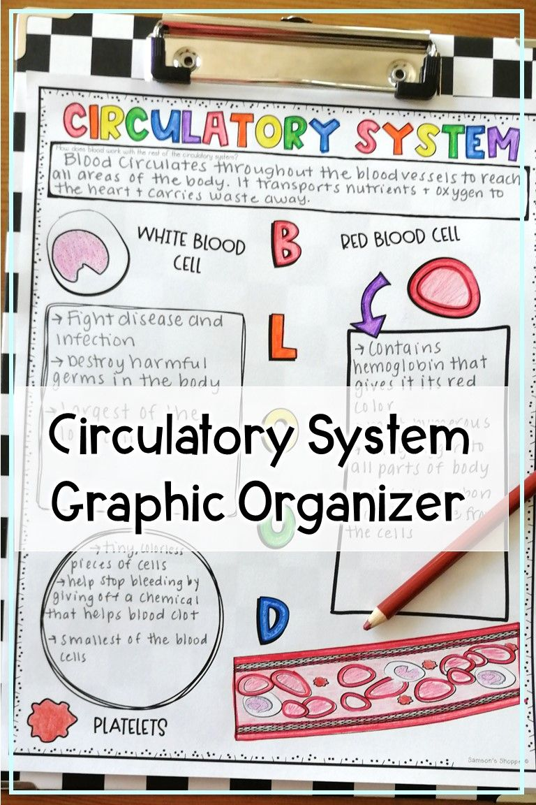 Circulatory System Worksheets Of Diagrams And Note Drawings For Kids In 2020 Body Systems Circulatory System Students Health