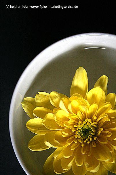 Chrysantheme, #gelb, #blume, blüte // 365tagegelb.wordpress.com