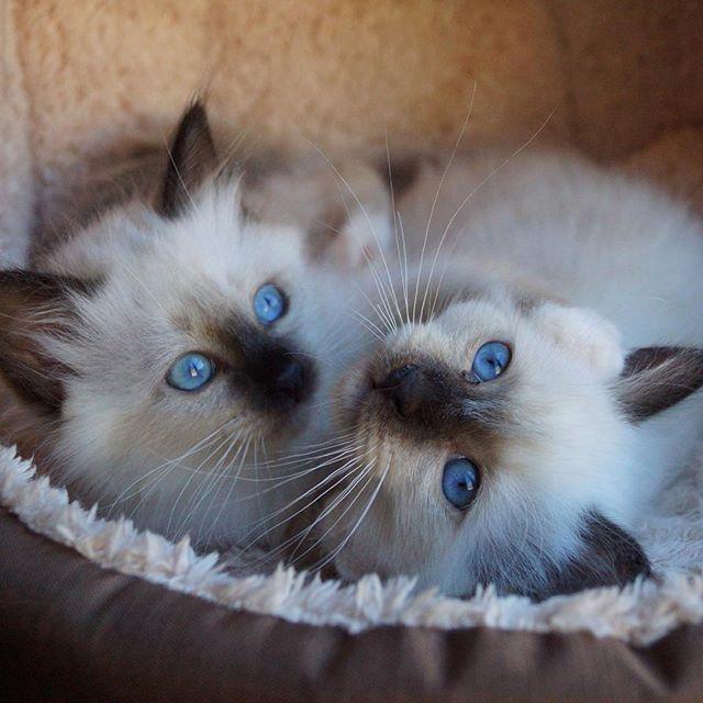 Wow those eyes...