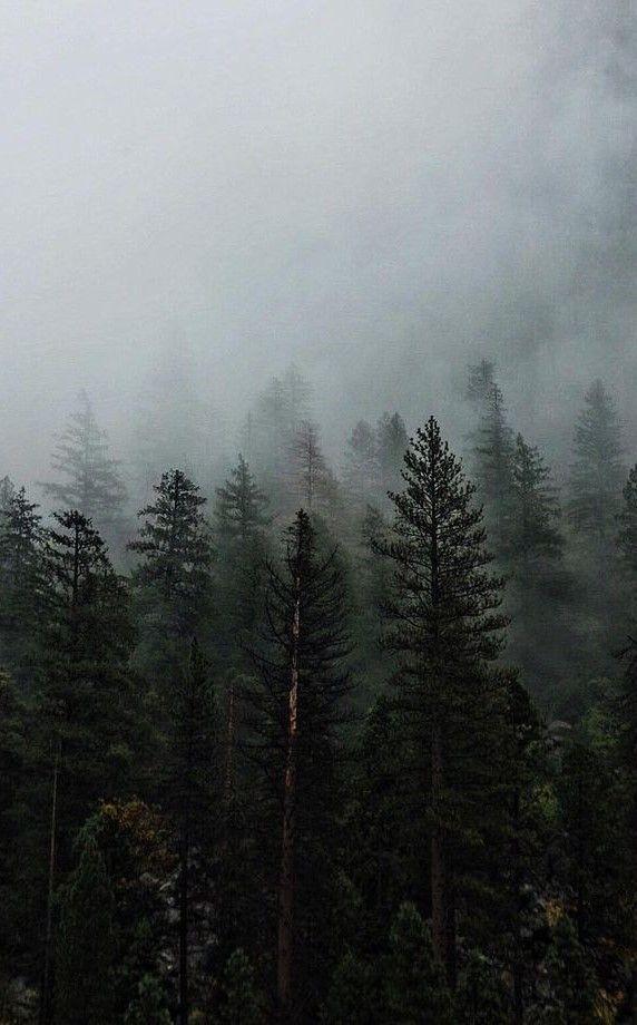 foggy forest wallpaper 4k