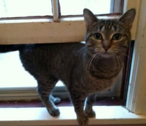Renee Is Adoptable At Feline Rescue Saint Paul Mn Sweet Young Girl Cat Prefers T Animals In Need Of Help Animales Que Necesitan Ayuda Urgente Cats