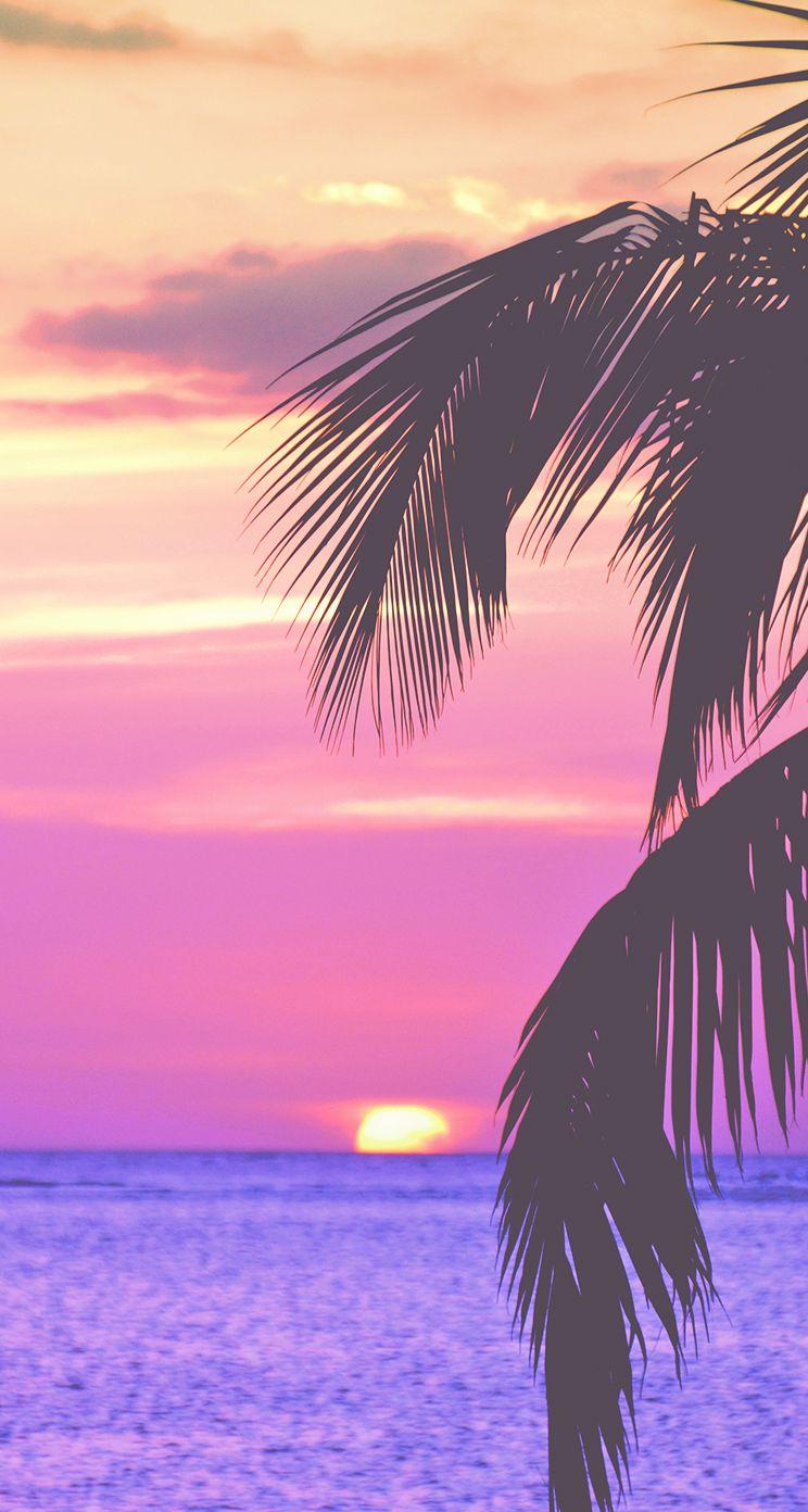 Sky Tree Nature Horizon Palm Tree Sunset In 2020 With Images Tree Wallpaper Iphone Wallpaper Iphone Summer Palm Trees Wallpaper