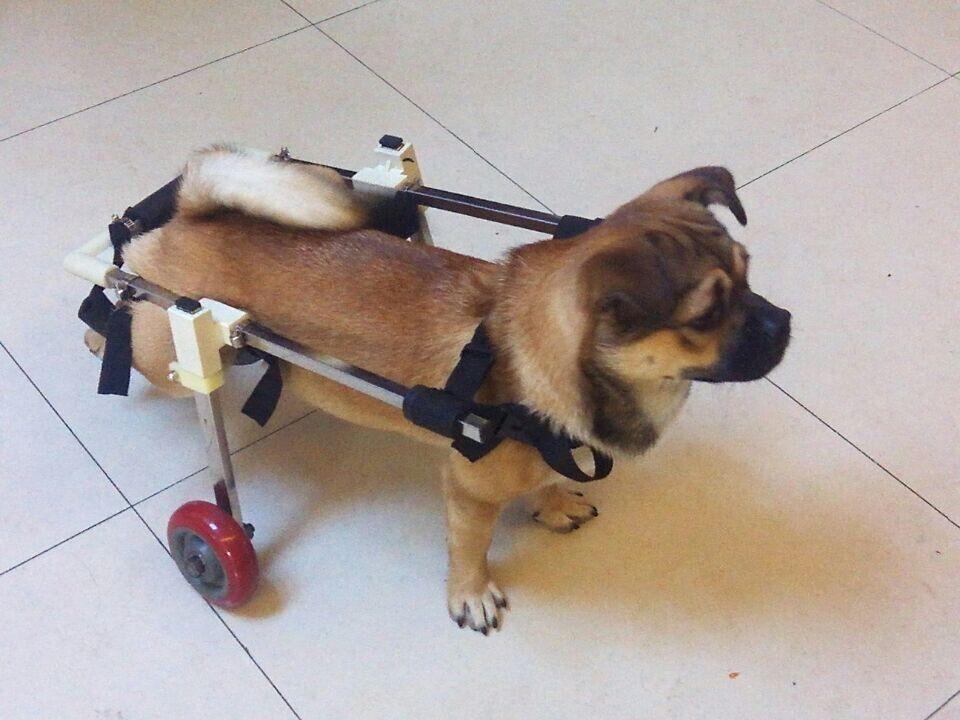 Resultado de imagen para paralitic puppy