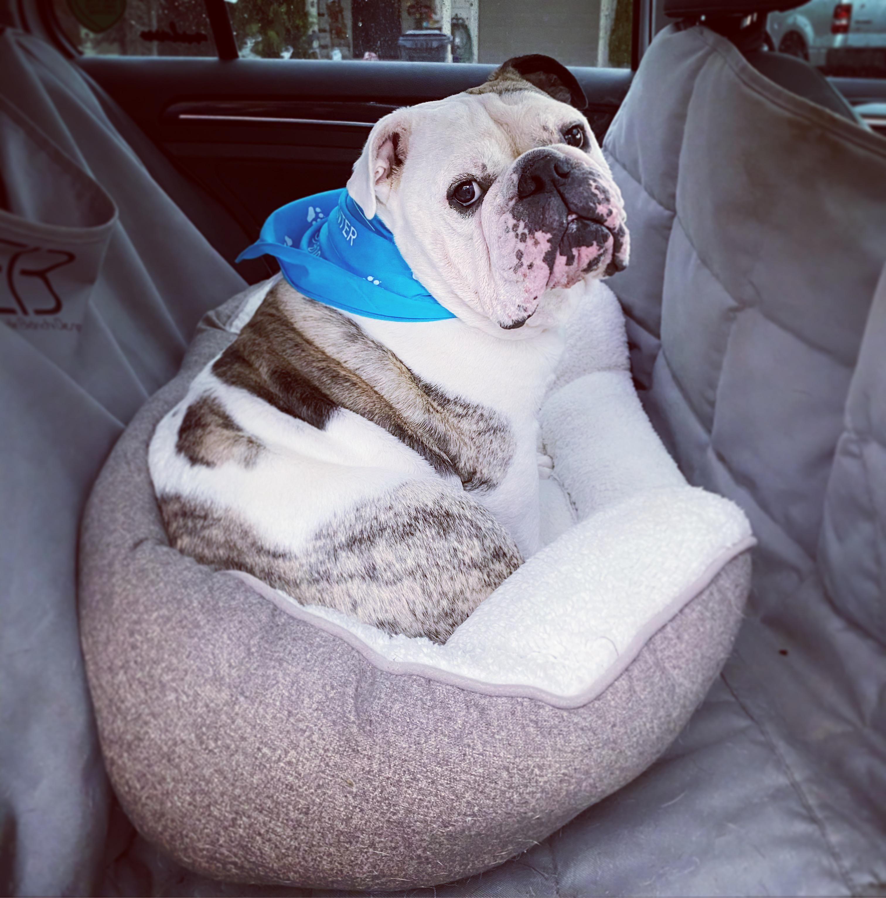 My big brave boy had his last chemotherapy injecti