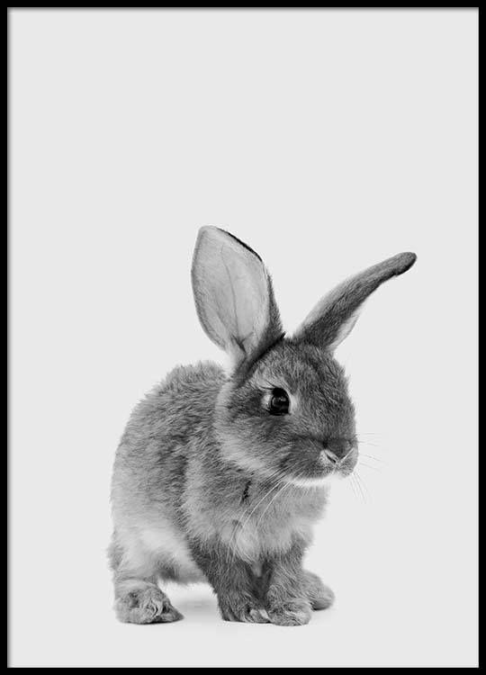 The little bunny Poster in der Gruppe Poster / Größen und Formate / bei Desenio AB (3636) #cutebabybunnies