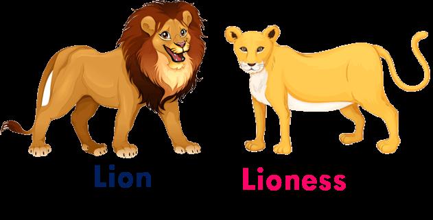 Gender Of Animals English Study Here In 2020 Gender Of Animals Animals Name In English Animals