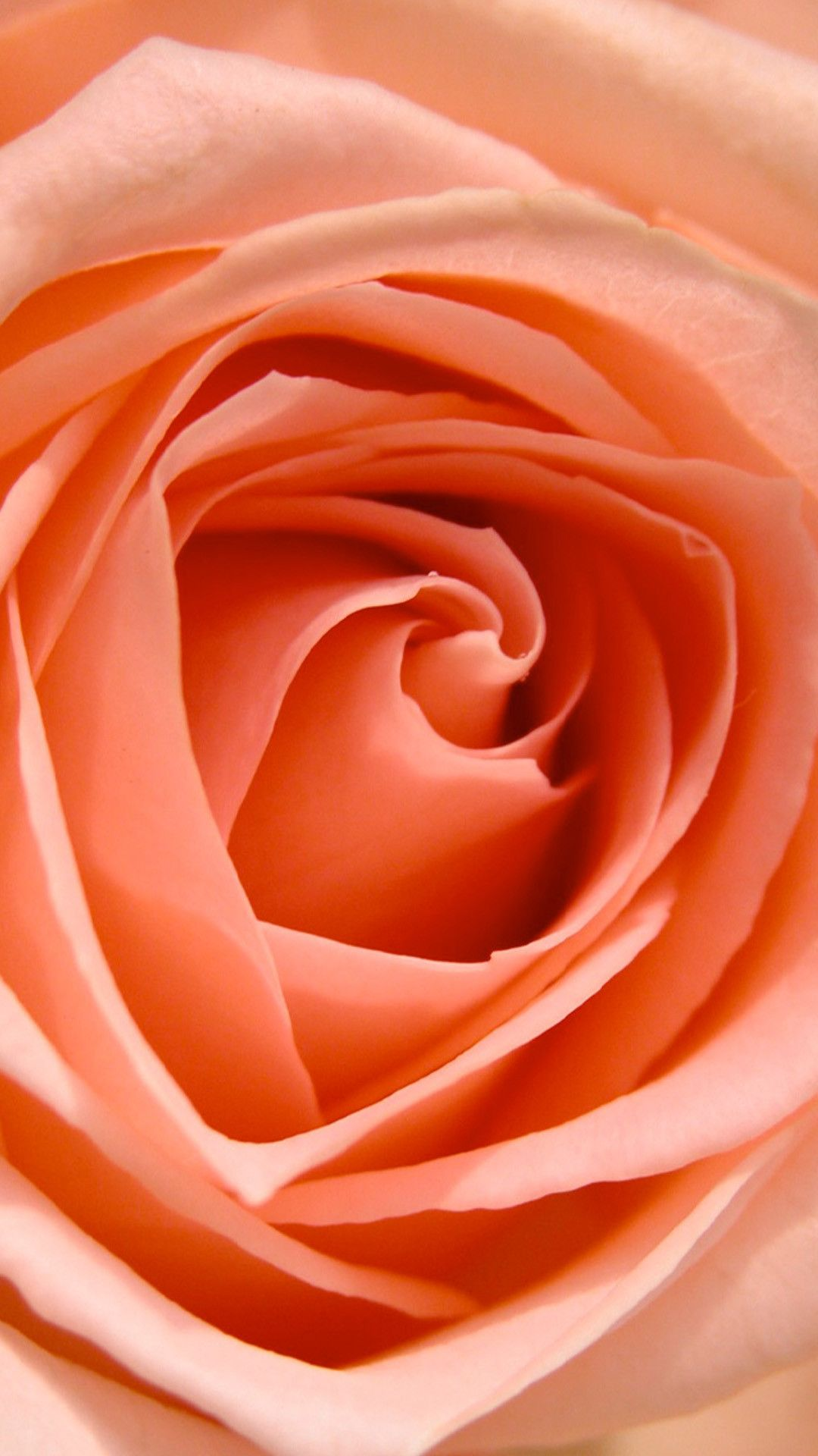GONE FLORAL Coral Rose Print Flower phone wallpaper