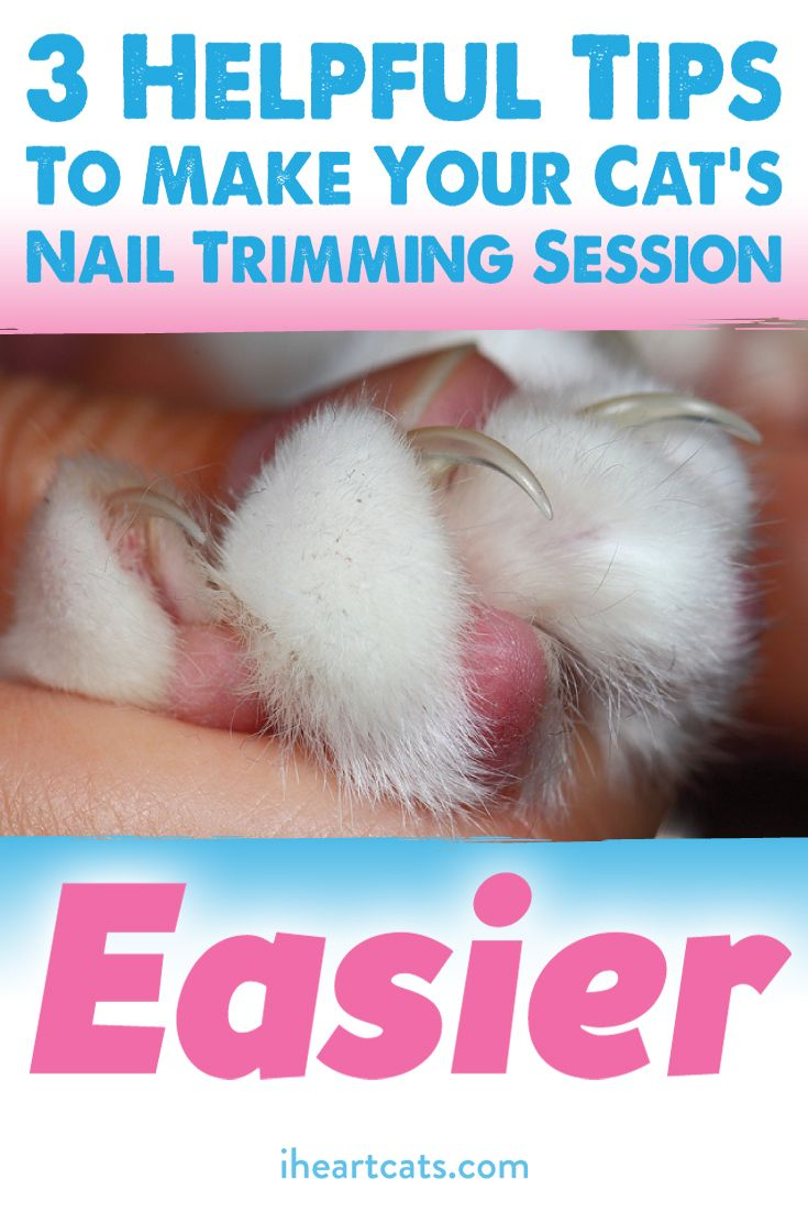 Clipping Kitty S Claws Doesn T Have To Be A Catastrophe Trim Cat Nails Cat Nails Cat Health