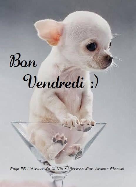 Bon Vendredi :) | Bon vendredi, Vendredi images, Image drôle chien