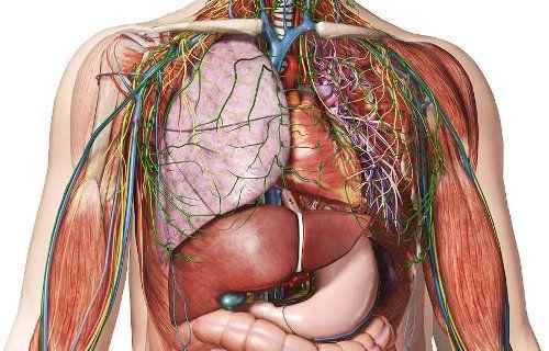Recursos de Medicina: Atlas de anatomía humana online - Somos ...